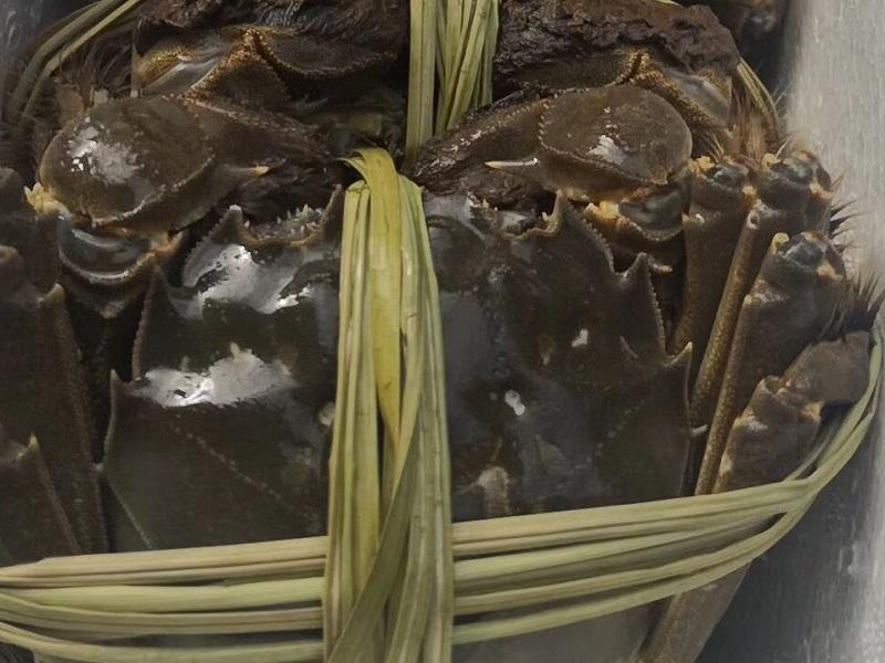 大闸蟹和螃蟹的区别
