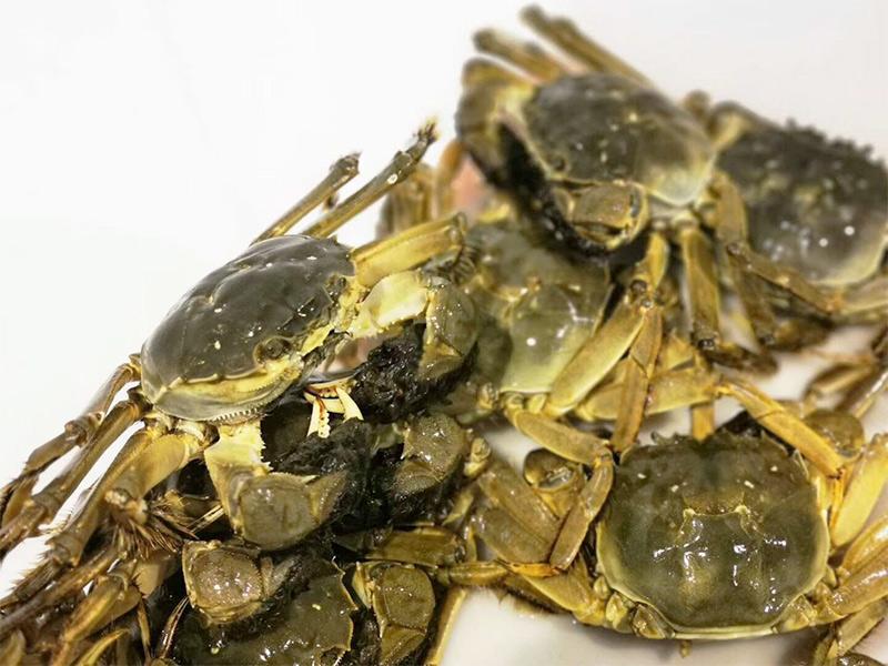河蟹吃什么