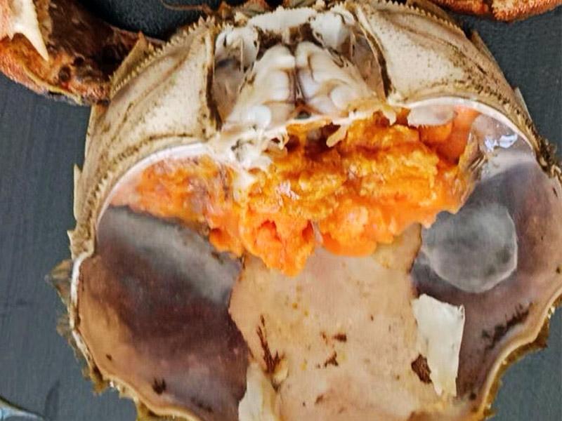 蟹胃为什么不能吃