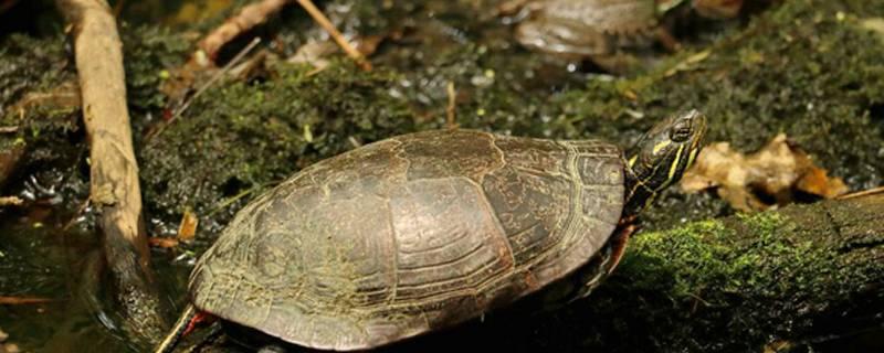 龟腐皮最有效方法